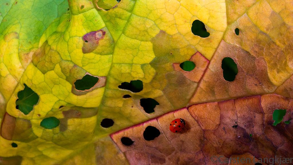 Ladybug and Rhubarb