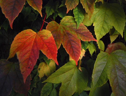 r-multicolor