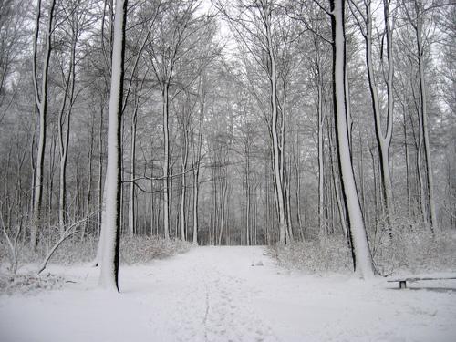 r-snow