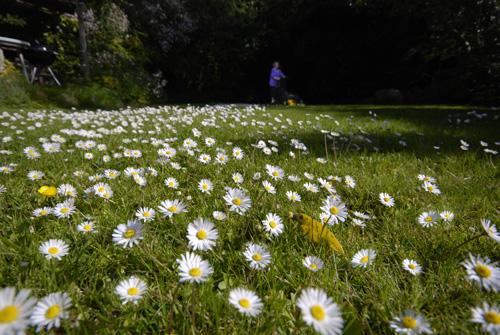 r-daisy