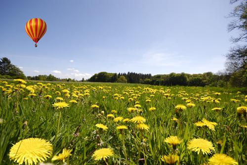 r-sommermark-med-ballon